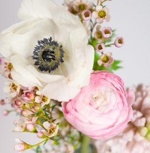 anemone renoncule