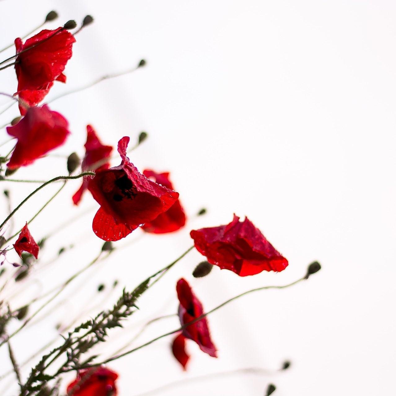 bloom-1838337_1920