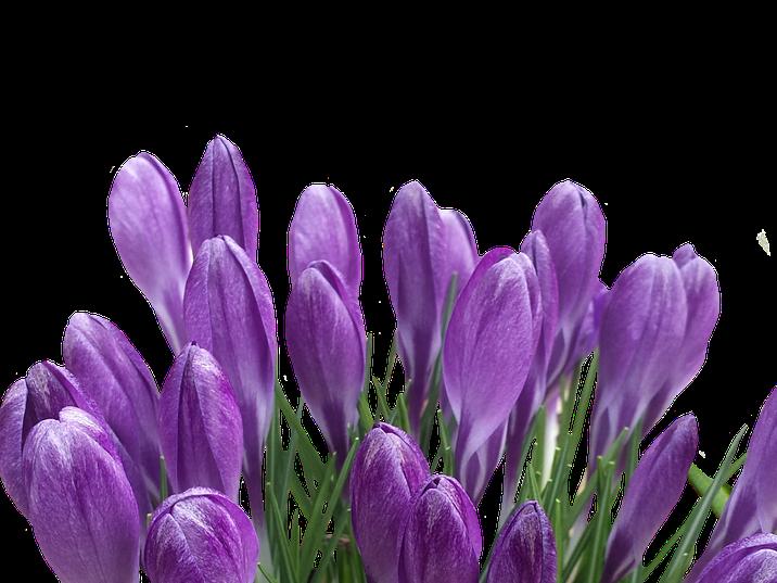 spring-3017375_1920